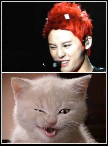 Junsu vs. Kitty