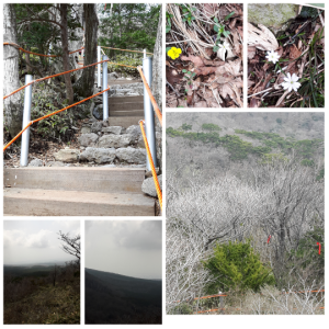 Some of the mountain flowers and views.  The ones with orange rope is the hardest part of the climb..I DID IT! Even with my backache :)